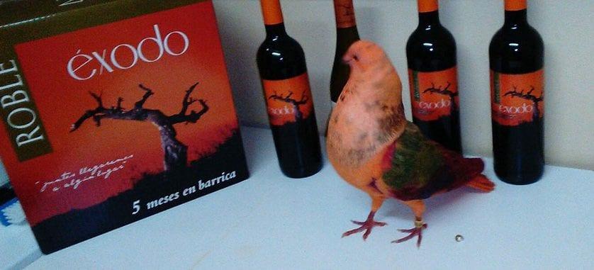 """El palomo """"Rasputín """" protagonista de una campaña publicitaria de los vinos de Jumilla en China"""