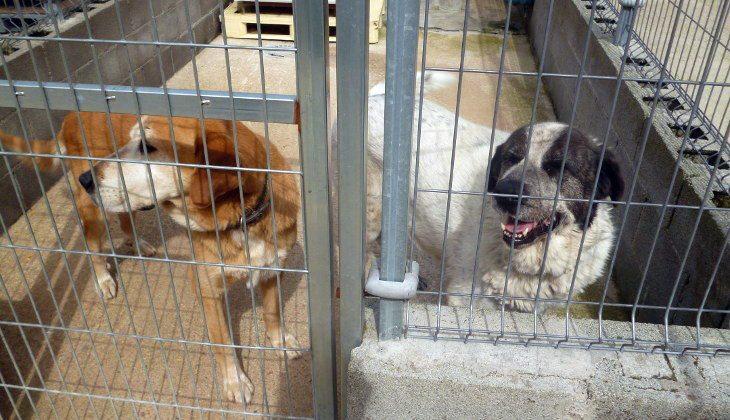El Ayuntamiento de Jumilla contrata a '4 Patas' para el Servicio de recogida de animales abandonados