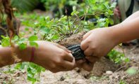 Los alumnos de 5º de Primaria participarán en dos jornadas de re forestación