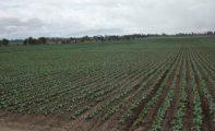 Fallece un trabajador agrícola de 44 años en Jumilla