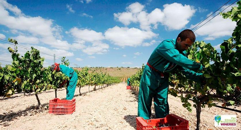 Luzón consigue el certificado de bodega medioambientalmente sostenible