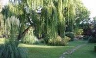 Aprobadas bases reguladoras del concurso de proyectos para mejora del Jardín Botánico