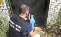 Guardia Civil y Policía refuerzan la vigilancia para evitar robos en explotaciones agrícolas