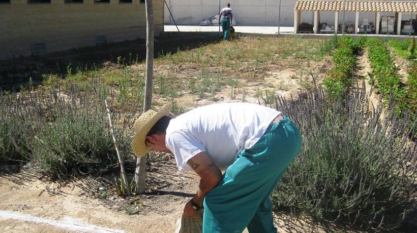 Penados en la cárcel de Murcia II desarrollan un proyecto agrícola de los Templarios jumillanos para combatir el calentamiento climático del planeta
