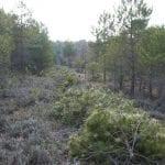 Convenio entre Jumilla y la Comunidad Autónoma para la prevención y extinción de incendios forestales