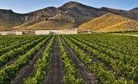 Los vinos de Jumilla en la candidatura para ser considerados Patrimonio de la Humanidad