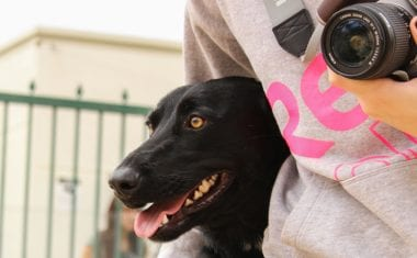 """Animales abandonados posan de modelos gracias al taller de """"retrato perruno"""""""