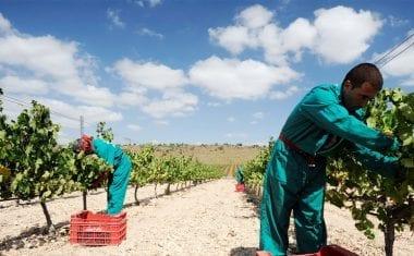 El Observatorio Español del Mercado del Vino destaca el aumento de las exportaciones