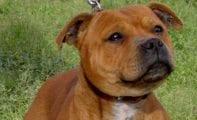 Encontrados en las afueras de Jumilla los cadáveres de dos perros con indicios de haber sido ahorcados