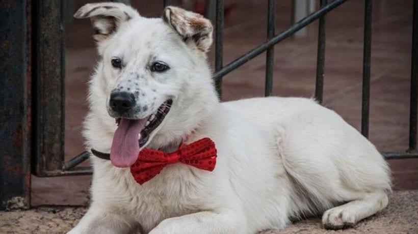 La Asociación 4 Patas Jumilla hace un llamamiento para encontrar a una perra extraviada