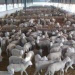 Coag celebra mañana una jornada sobre el Medio Rural y Agrario