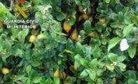 La Guardia Civil esclarece una docena de estafas en el sector agrícola que ha afectado a agricultores de Jumilla