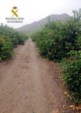 estafados-agricultura-jumilla2