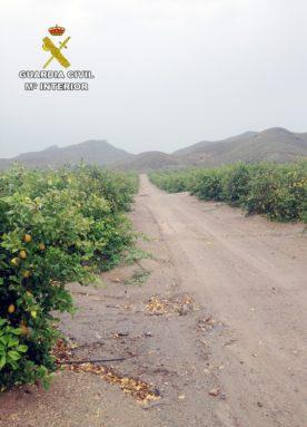 estafados-agricultura-jumilla3
