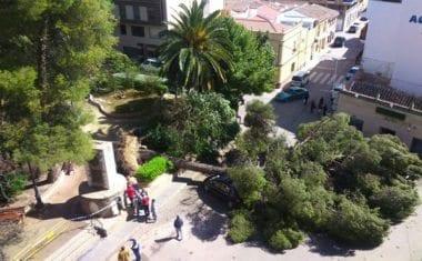 El fuerte viento tumba un pino centenario del Jardín del Caracol