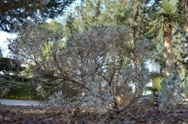 Plantas hipoalergenicas