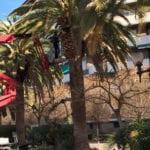 IU-V culpa al equipo de gobierno de la pérdida de siete palmeras del Paseo Poeta Lorenzo Guardiola