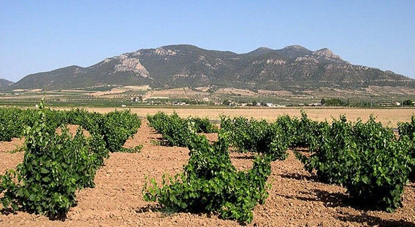 Medio Ambiente potenciará las actividades agroturísticas, enológicas y naturales sostenibles en el Carche