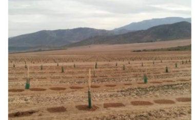 Expediente a una finca del Ardal por transformar de secano a regadío un terreno