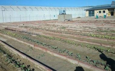 Los Templarios de Jumilla compran diez toneladas de tierra para la cárcel de Campos del Río