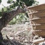 """COAG pide una reunión urgente al consejero de Agricultura por el sospechoso """"modus operandi"""" de las bodegas con el precio de la uva"""