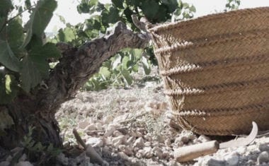 En la vendimia 2018 se cosecharán unos 80 millones de kilos de uva