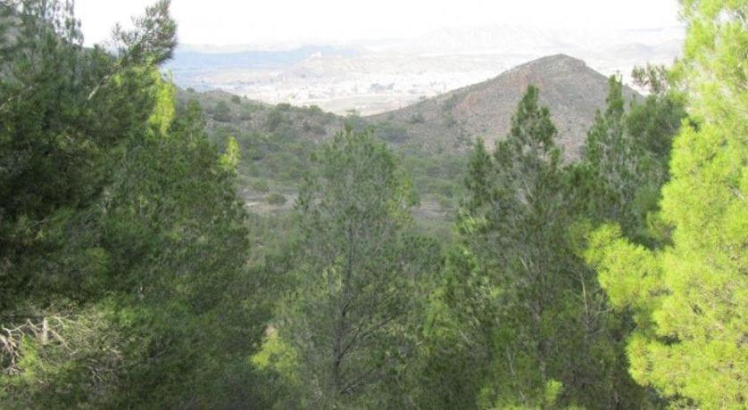 El Ayuntamiento contratará a 14 personas para trabajos de mejora en la Sierra de los Bujes