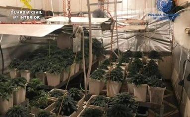 plantacion-marihuana-jumilla