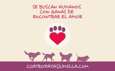 Cuatro Patas Jumilla ya trabaja en la organización de actividades para la Semana de los Derechos de los Animales