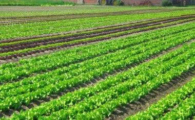 UPA destaca los efectos beneficiosos de la lluvia para la agricultura