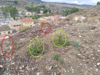 plantas-secas-y-verdes-camino-subidor-castillo-jumilla