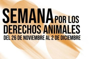 Actividades infantiles, cena vegana y una pasarela para conmemorar el Día de los Derechos de los Animales