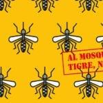 Salubridad pide precaución para evitar la aparición de mosquitos tigre en el Cementerio