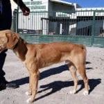 Jumilla cumple con el 'sacrificio cero' de animales gracias a la asociación 4 Patas