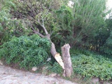 viento-parte-arbol-jardin-botanico-jumilla