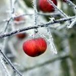 Agricultura alerta de las posibles heladas y recuerda las medidas preventivas
