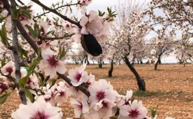 Agricultura alerta de la necesidad de realizar en los próximos días tratamientos contra la avispilla