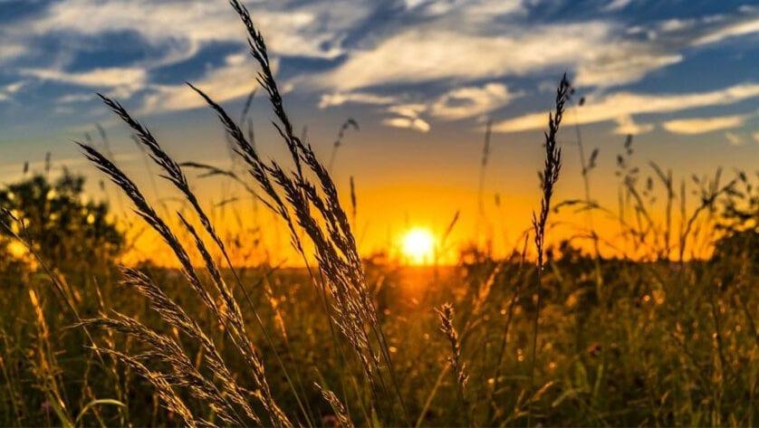 Agricultura amplía hasta el 15 de mayo el plazo de presentación de la solicitud única en la Región de Murcia
