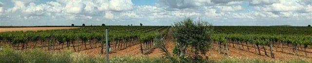 El cultivo de la vid también se puede beneficiar