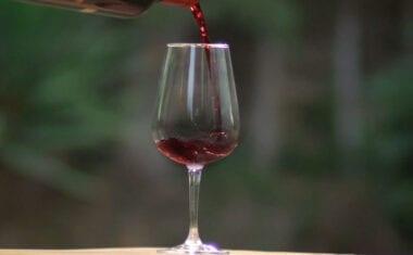 Jumilla se va de vinos