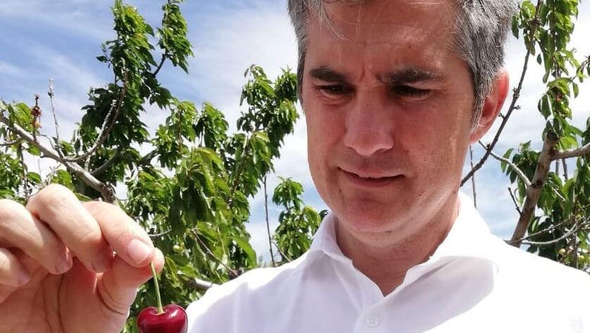 El consejero de Agricultura Miguel Ángel del Amor visita en Jumilla una finca experimental de cultivo del cerezo