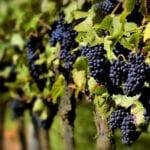 I Jornadas de Agrocultura del Nordeste de la Región de Murcia