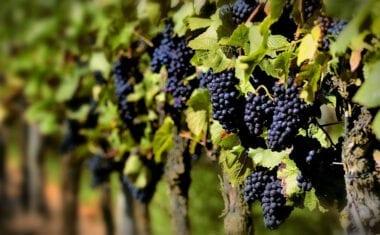 El Parlamento Europeo aprueba prolongar medidas de apoyo por Covid-19 al sector del vino en 2021