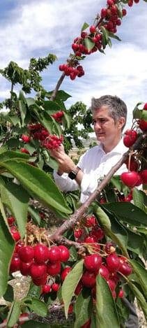 Finca Experimental de cultivo de cerezas