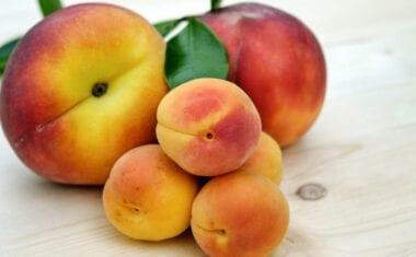 UPA exige actuaciones que aseguren el correcto funcionamiento de la campaña de fruta de hueso