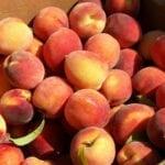 La campaña de la fruta comienza sin precio