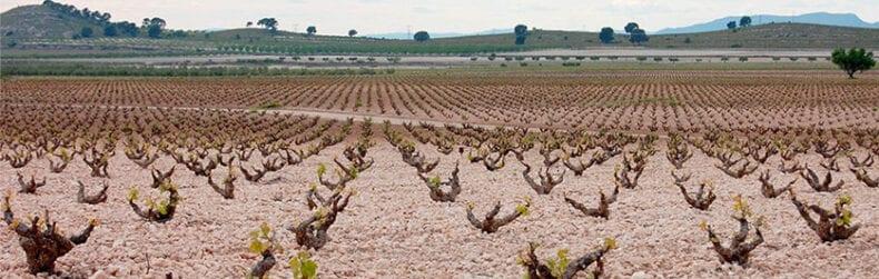 Los suelos calizos y pedregosos favorecen el cultivo ecológico