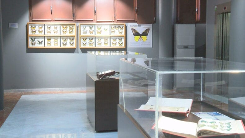 Sección de Entomología del Museo Municipal de Ciencias de la Naturaleza D. Jerónimo Molina