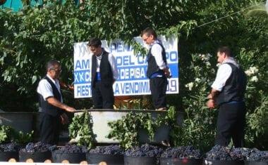 Pleno para la peña La Unión en el XX Campeonato de Pisaores de Uva