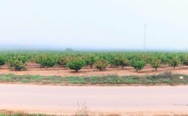 España defenderá extender autorizaciones para plantar viñedo más allá de 2030